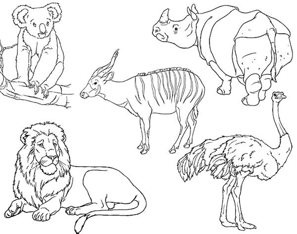 Animales vertebrados para pintar - Imagui